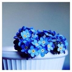 Forget-me-nots... such a cute name!  #forgetmenot #vergissmeinnicht #weddingflowers