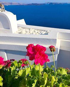 🌿🌺🌿Good Morning 🌿🌺🌿 🇬🇷🇬🇷🇬🇷 GREECE 🇬🇷🇬🇷🇬🇷