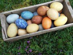 easter eggs natur