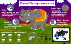 #elephants #largest mammal #india #asia #india #animals of india #poster #ekdali #charts #kids The Asian elephant has smaller ears than the African elephant. Use this poster to teach more such facts about the elephant