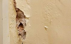 Water Damage Mold – Inspection, Removal, Remediation and Prevention