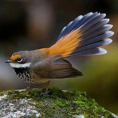 Amazing Bird Photography National Parks 62 Ideas For 2019 White Bird Tattoos, Black Bird Tattoo, All Birds, Little Birds, Pretty Birds, Beautiful Birds, Geometric Bird, Black And White Birds, Tiny Bird