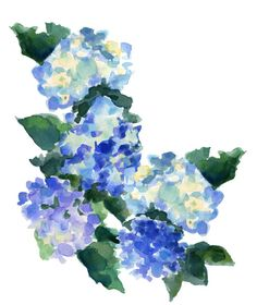 Lovely hydrangea print by Inslee Haynes