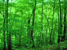 Big Rapids, Michigan ~ so green so lush <3