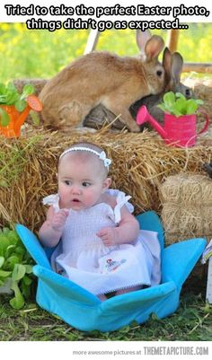 Bunnies ruined my Easter photo…