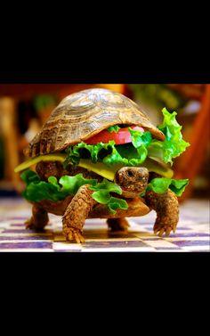 Miam, un hamburger tortue !