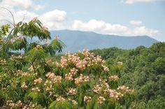 A beautiful day in the Smoky Mountains
