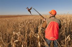 Pheasant hunting in South Dakota - best place in the world to do it.