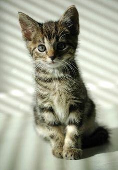 Our cat, Vlinder