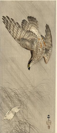 Goshawk on rabbit Koson ca. 1910 22x49 cm