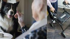 Förslag Fler djur på äldreboenden - Aftonbladet