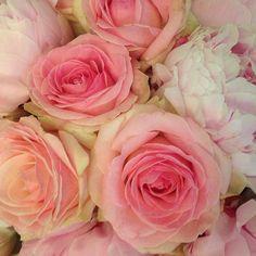 pink flowers RHS