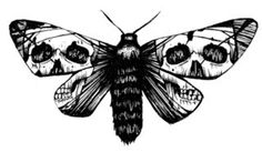 <3 Death Moth--->Scarily similar to the tattoo I have on my back- LOVE