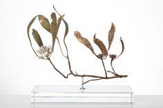 Nic Bladen / Protea acaulus / sterling silver & bronze / 29 cm high