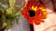 #1st sun ray#winter mornings# lovely fresh flower...!!!