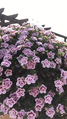 für Beet & Balkon Beautiful for your you will find with us! Clematis Care, Clematis Trellis, Clematis Plants, Clematis Flower, Garden Trellis, Clematis Varieties, Climbing Clematis, Purple Clematis, Flowers For You