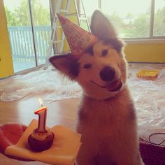 Happy (Late) First Baroo-Day, Lulu!