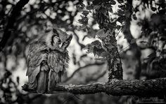 """""""Sleepy Eyes"""" Verraux's Eagle Owl Kruger National Park, South Africa  I love being able to make a photographic opportunity out of something that many people will dismiss or drive by. This Verreaux's Eagle Owl was sleeping in a tree in the northern reaches of the Kruger National Park in South Africa, back in August of 2011. It was my first proper sighting of this owl in Kruger, as I normally find them often in the Kalahari. What do you think of this one?  This is part of my ..."""