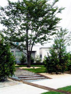 >Japanese Elm garden