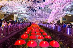 Jinhae South Korea is most famous in the spring for its incredible Cherry Blossoms © Guitar photographer / Shutterstock.com