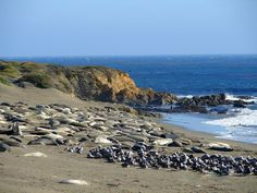 Sea lions basking in the sun. The Big Sur - Hwy 1 - Pacific Coast Highway, California