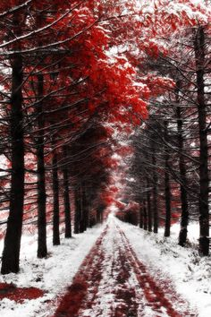 Bloody Autumn: by Frider