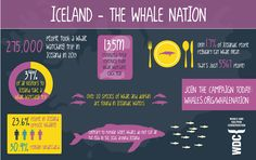 Facts about whale watching in Iceland