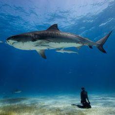 """""""#дайвинг #дайв #погружение #подводой #подводныймир #дайвингидругоймир #вода #интересное #факты #красота #море #океан #дайвер #отдых #позитив #diving #diver #underwater #dive #divingandotherworld #ocean #sea #scubadiving #акваланг #scuba"""" Photo taken by @divingandotherworld on Instagram, pinned via the InstaPin iOS App! http://www.instapinapp.com (09/12/2015)"""