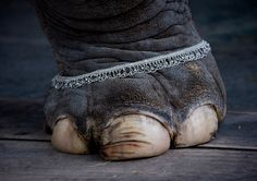 India Elephant - At 3 years old, Joey was in awe at the size of elephant's toenails.