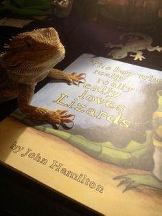 Clint Boon's pet bearded dragon getting his claws into my book. Manchester Art, Bearded Dragon, Lizards, Got Him, Book Publishing, Boys Who, Claws, My Books, Art Gallery