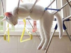 Cats sleeping in unconventional places http://ift.tt/2eEQ6iU