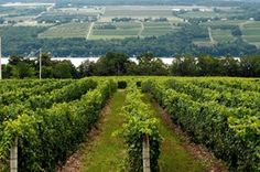 Lettie Teague (WSJ 08/03/2013 article) on the Finger Lakes region, where Riesling remains king. Come visit!