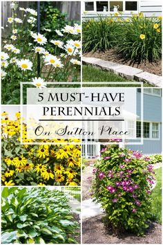 List of 5 Must-Have Perennials that are tried and true performers. Advice and tips for care and maintenance. #spon