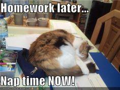 Amen, cat