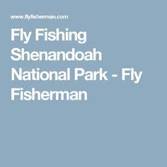 Fly Fishing Shenandoah National Park - Fly Fisherman