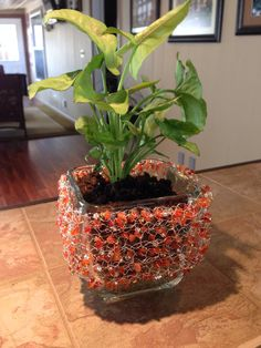 This plant is much happier now that it's pot is all dressed up with wire crochet. Carnelian, crystal and glass beads.