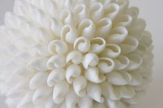 White Seashell Ball (http://www.caseashells.com/white-seashell-ball/)