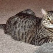 Making Cat Repellent For Furniture | EHow