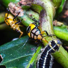 Nature and its amazing scenes!  Do you like #macro too?  #macroworld #photographer #macro #macrophotography #passion #photo #photography #colombia #love #style #nature #lifestyle #bugs #insects #beauty #shotoftheday #natureshots #blogger #vlogger #meditate #macrohighlight #canon #laptoplife #traveler