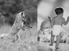 Human baby and fox pup