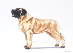 English Mastiff Dog Archival Fine Art Print by EmmasBestInShow