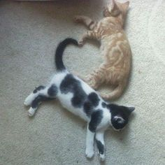 こちらは、お昼寝している二匹の猫の、腕とシッポがつくりだしたハート。 仲良く遊んでいる夢でも見ているのでしょうか。