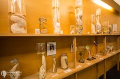 The phallological museum in Reykjavik, Iceland