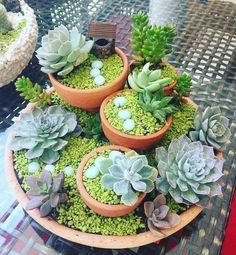 43 Awesome Mini Succulent Ideas in Pots - Deko mit Suculentas - Different Types Of Succulents, Types Of Succulents Plants, Cacti And Succulents, Planting Succulents, Growing Succulents, Succulent Landscaping, Succulent Gardening, Succulent Terrarium, Succulent Ideas