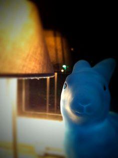 photo by karo.lina, via Flickr. Blue bunny