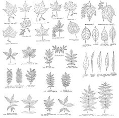 Printable Vintage Field Journal - Leaves - The Graphics Fairy