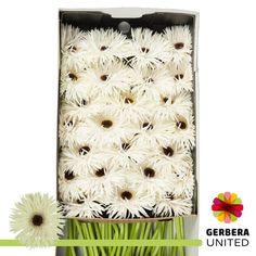 Gerbera, Office Supplies, Rugs, Home Decor, Farmhouse Rugs, Decoration Home, Room Decor, Home Interior Design, Rug