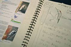 Nature Journaling for children