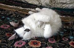 :-)Kitten