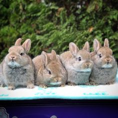 In case you are searching for a furry friend which is not just adorable, but easy to have, then look no further than a family pet rabbit. Animals And Pets, Baby Animals, Cute Animals, Baby Bunnies, Cute Bunny, Little Bunny Foo Foo, Rabbit Photos, Rabbit Breeds, Some Bunny Loves You